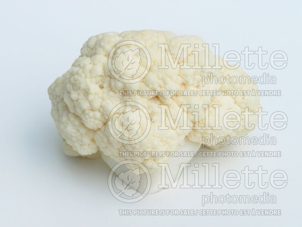 Brassica oleracea var. botrytris (Cauliflower vegetable – chou fleur) 5
