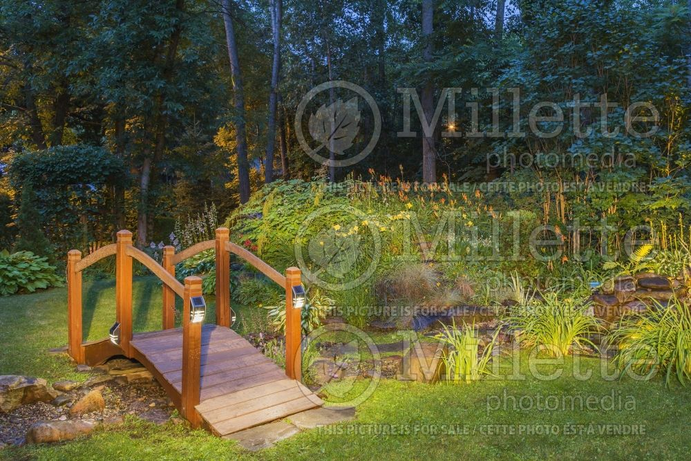 Footbridge over stream and pond at dusk 2