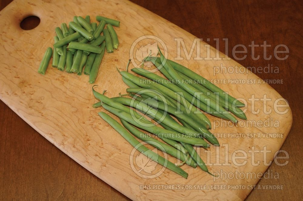 Phaseolus coccineus (Green beans vegetable - haricots) 4