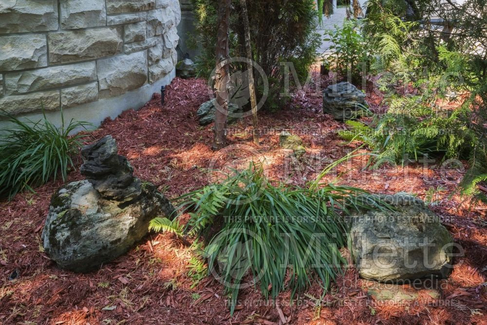 Red mulch border with decorative rocks and plants 1