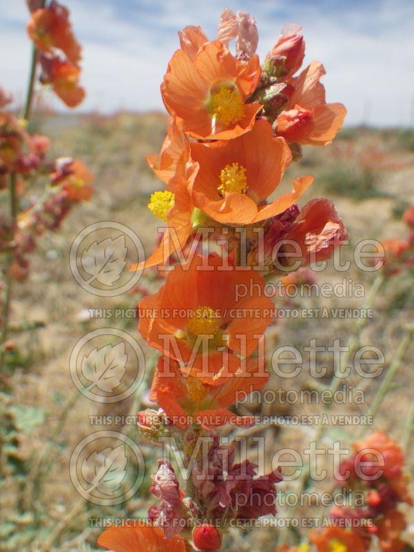 Acheter vos photos de plantes et de fleurs en ligne for Acheter fleurs en ligne
