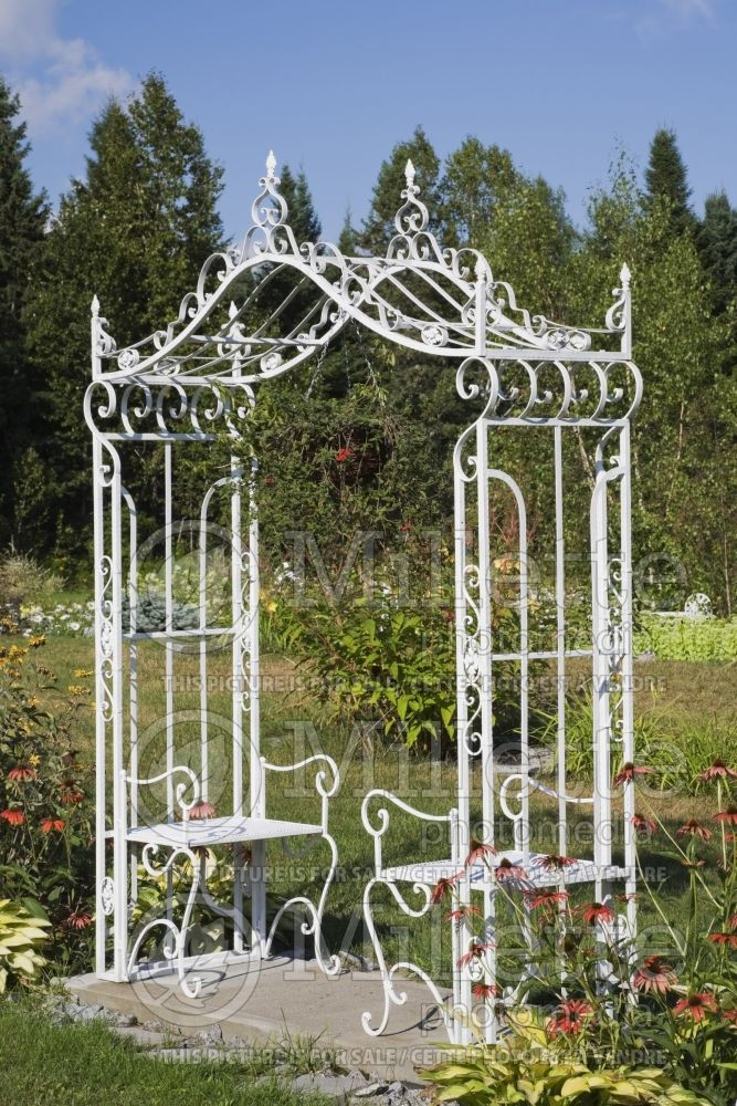 White wrought iron metal arbour with sitting benches next to borders with red Echinacea and Hosta plants 1